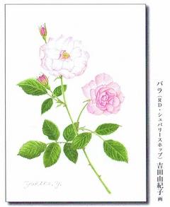 NHK学園 やさしい植物画教室 作品展 画像1